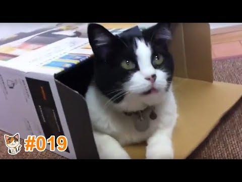 動画で面白画像!猫 かわいい 動画 #19  ❝ 猫 おもしろ 動画特集 ❞ 猫 動画 猫 画像 2017.ver ※ この動画を見て癒されましょ ※の面白画像