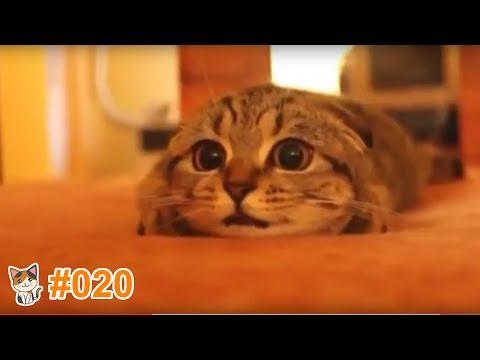 動画で面白画像!猫 かわいい 動画 #20  ❝ 猫 おもしろ 動画特集 ❞ 猫 動画 猫 画像 2017.ver ※ この動画を見て癒されましょ ※の面白画像