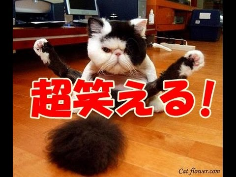 動画で面白画像!超笑える ネコのGIF画像がおもしろすぎるwwwFunny Cats Compilationの面白画像