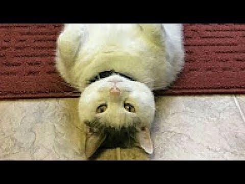 動画で面白画像!【吹いたら負け】猫の最新おもしろ画像集!可愛いネコのツイートまとめ!癒されたい人どうぞの面白画像