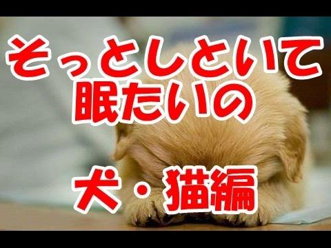 動画で面白画像!犬と猫 面白画像 可愛い寝顔がたまらない つい笑顔にの面白画像