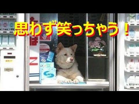 動画で面白画像!【吹いたら負け】思わず笑っちゃうジワジワ来るおもしろ可愛い動物の犬・ネコ・鳥など笑える画像①の面白画像