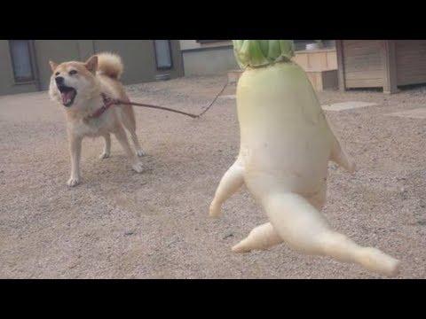 動画で面白画像!めっちゃ笑える!セクシー&おもしろ野菜画像集の面白画像
