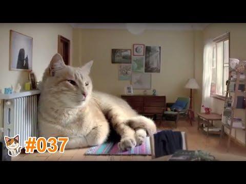 動画で面白画像!猫 かわいい 動画 #37 ❝ 猫 おもしろ 動画特集 ❞ 猫 動画 猫 画像 ※ 海外の猫が出ているCM Part1 ※の面白画像