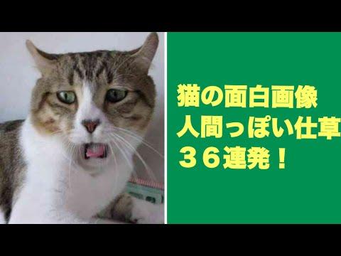 動画で面白画像!猫の面白画像 人間っぽい仕草36連発!Cat funny imageの面白画像