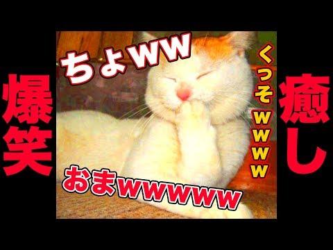 動画で面白画像!【爆笑】ネコのおもしろ画像集 ニヤニヤ出来る面白かわいい猫まとめ 疲れた時にどうぞ!【吹いたら負け】の面白画像