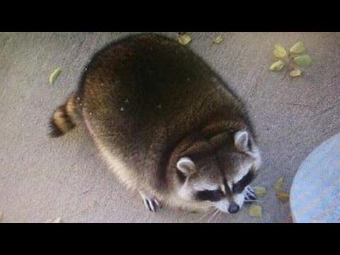 動画で面白画像!動物おもしろハプニング画像集!動物のおもしろ画像を集めてみましたの面白画像