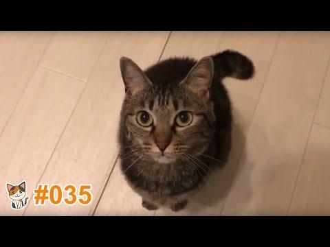 動画で面白画像!猫 かわいい 動画 #35  ❝ 猫 おもしろ 動画特集 ❞ 猫 動画 猫 画像 ※ Animation special story of a cute cat ※の面白画像