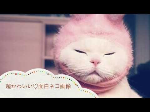動画で面白画像!超かわいい 面白ネコ画像の面白画像