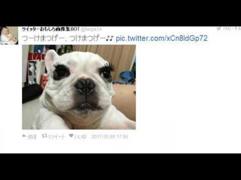 動画で面白画像!【吹出し注意】Twitterで話題のおもしろ画像ツイートまとめ魚拓の面白画像