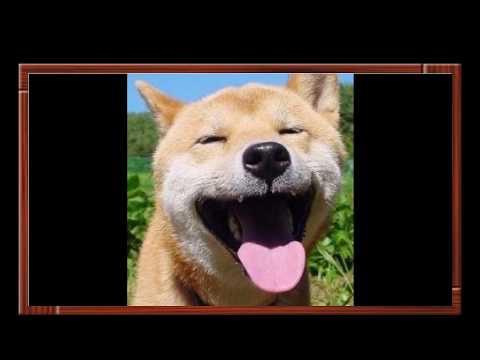 動画で面白画像!いろんな犬のおもしろ可愛すぎる画像集の面白画像
