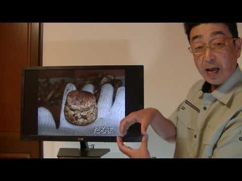 動画で面白画像!今までに出会ったマツタケ達! 面白画像のご紹介。の面白画像