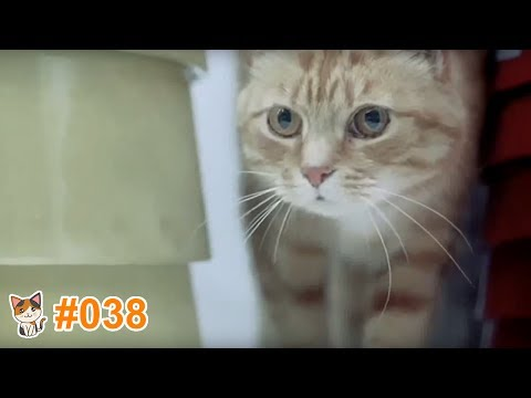 動画で面白画像!猫 かわいい 動画 #38 ❝ 猫 おもしろ 動画特集 ❞ 猫 動画 猫 画像 ※ 海外の猫が出ているCM Part2 ※の面白画像