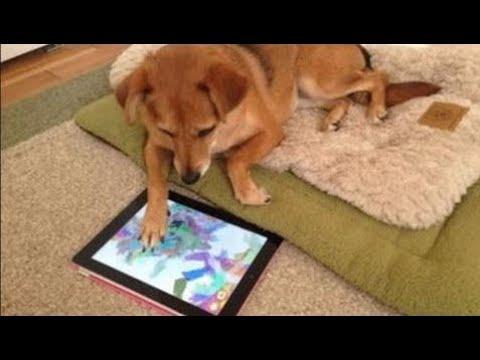 動画で面白画像!「絶対笑う」最高におもしろ犬,猫,動物のハプニング, 失敗画像集 2017 ( p10 ) HDの面白画像