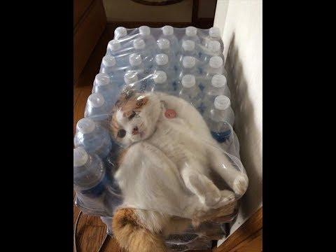 動画で面白画像!【吹いたら負け】ジワジワ来るww ネコのおもしろ画像 おもしろ可愛い猫集。・・・・疲れた時癒しにどうぞ!【笑える!!癒される】の面白画像
