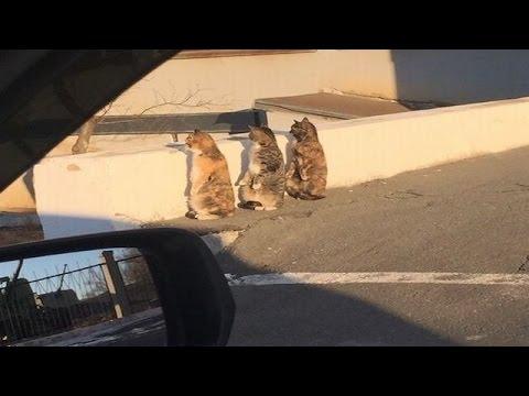 動画で面白画像!【猫面白画像】何してるの?3匹そろって二足立ちの面白画像