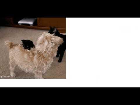 動画で面白画像!【かわいい!!笑える!】 猫(ねこ) おもしろGIF画像秀逸まとめ 【おもしろ画像】の面白画像