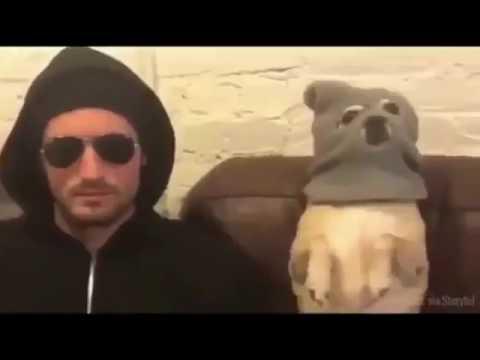 動画で面白画像!「絶対笑う」最高におもしろ犬,猫,動物のハプニング, 失敗画像集 2017 ( p11 )の面白画像
