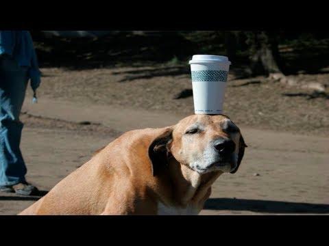 動画で面白画像!「絶対笑う」最高におもしろ犬,猫,動物のハプニング, 失敗画像集 2017 ( p15)の面白画像