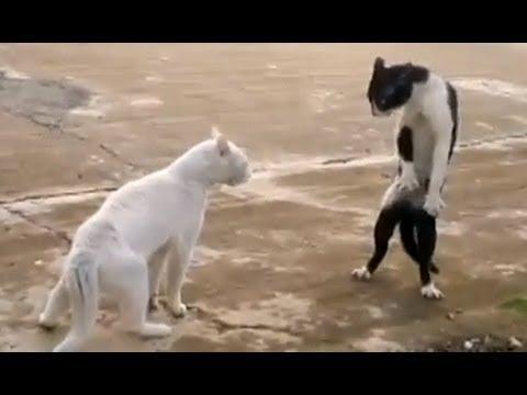 動画で面白画像!「絶対笑う」最高におもしろ犬,猫,動物のハプニング, 失敗画像集 2017 ( p17)の面白画像