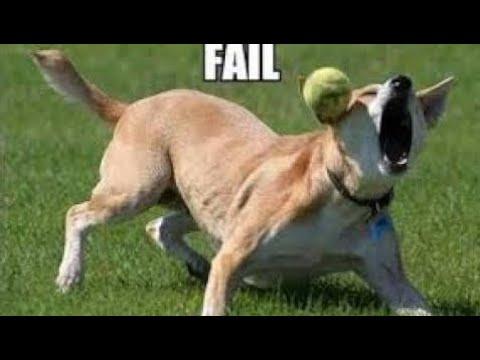 動画で面白画像!「絶対笑う」最高におもしろ犬,猫,動物のハプニング, 失敗画像集 #18 HDの面白画像