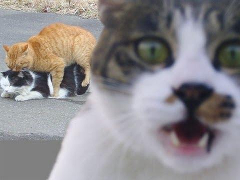 動画で面白画像!【動物】猫の面白画像集2 Slideshow of Funny Cats Vo.2の面白画像