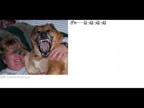 動画で面白画像!【腹筋崩壊注意】ネットで見つけた爆笑・衝撃面白画像まとめ!!の面白画像