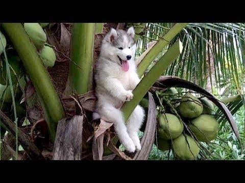 動画で面白画像!「絶対笑う」最高におもしろ犬,猫,動物のハプニング, 失敗画像集 2017 ( p12の面白画像