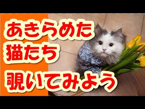 動画で面白画像!【決定的瞬間】猫面白画像 猫たちのやりたい放題の面白画像
