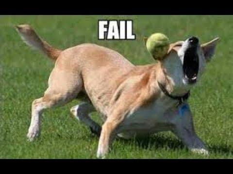 動画で面白画像!「絶対笑う」最高におもしろ犬,猫,動物のハプニング, 失敗画像集 #18の面白画像