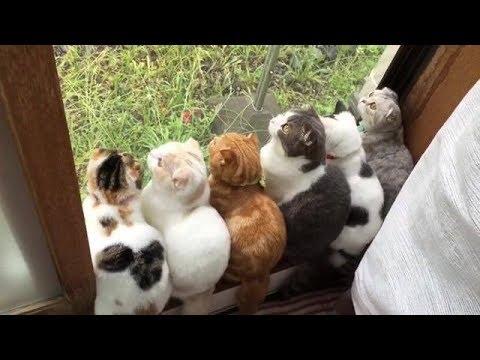 動画で面白画像!猫 かわいい – 猫 おもしろ – 最も面白い猫の動画 2017 #29の面白画像