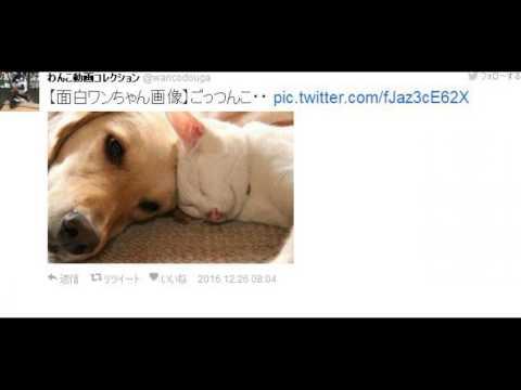 動画で面白画像!【おもしろ画像】耐えればネ申?Twitterの笑える画像の面白画像