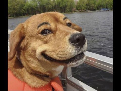 動画で面白画像!【衝撃】おもしろ動物画像「絶対笑う」最高におもしろい犬、猫、動物の画像まとめ【面白画像】の面白画像