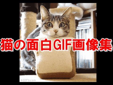 動画で面白画像!ネコのGIF画像がおもしろすぎるw 猫の面白GIF画像集の面白画像