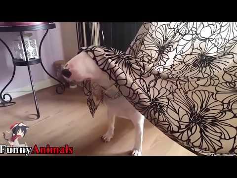 動画で面白画像!「絶対笑う」最高におもしろ犬,猫,動物のハプニング, 失敗画像集 2017 ( p18)の面白画像