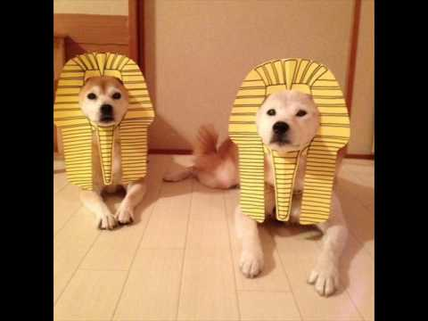 動画で面白画像!【爆笑www】可愛い動物達の面白画像wwwの面白画像