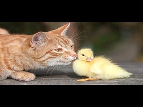 動画で面白画像!「絶対笑う」最高におもしろ犬,猫,動物のハプニング, 失敗画像集 2017 ( p16)の面白画像