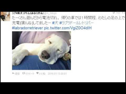 動画で面白画像!猫もロボットも「#電池切れ」Twitterのおもしろ画像の面白画像