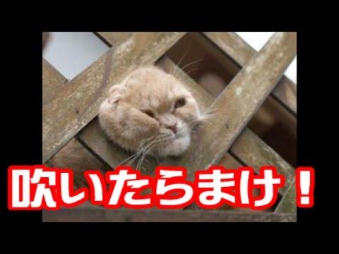 動画で面白画像!【吹いたら負け】爆笑!動物達の面白画像まとめ 【腹筋崩壊】の面白画像