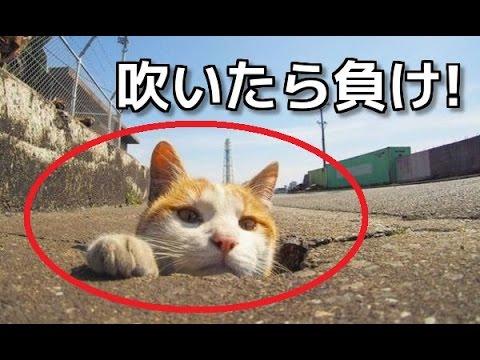 動画で面白画像!【吹いたら負け】猫の超おもしろ画像集!思わず二度見してしまう!?【ネコ好き必見!】の面白画像