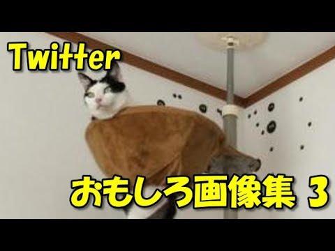 動画で面白画像!【Twitter】田舎のコンビニは広い?!おもしろツイート画像集3の面白画像