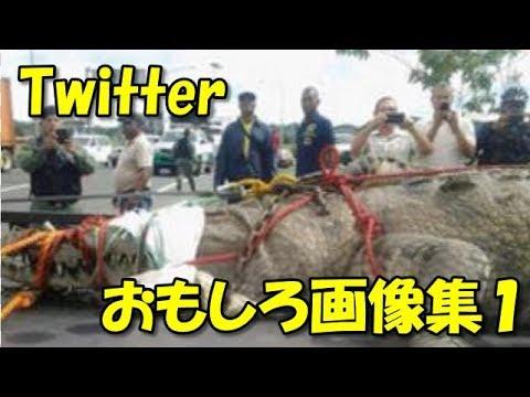 動画で面白画像!【Twitter】世界最大のワニもやばい!おもしろツイート画像集1の面白画像