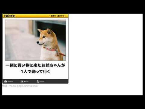 動画で面白画像!【bokete】かわいい犬のおもしろボケて画像まとめ!の面白画像
