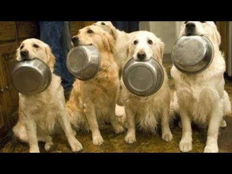 動画で面白画像!「絶対笑う」最高におもしろ犬,猫,動物のハプニング, 失敗画像集 2017 #26の面白画像
