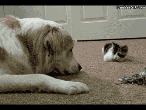 動画で面白画像!「絶対笑う」最高におもしろ犬,猫,動物のハプニング, 失敗画像集 2017 #28の面白画像
