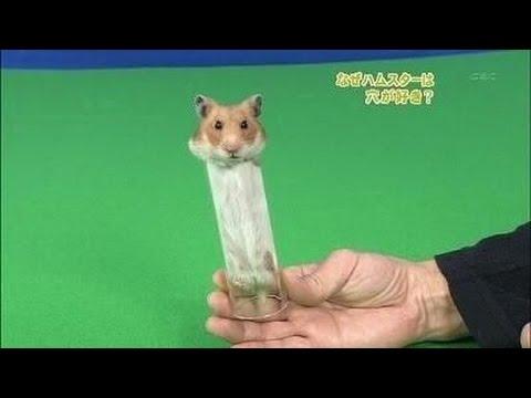 動画で面白画像!【動物】ハムスターの面白画像集Vo 2 Slideshow of Funny hamsterの面白画像