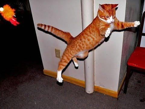 動画で面白画像!【面白画像まとめ】クスッと笑える 猫 おもしろ 癒やし画像集wwの面白画像
