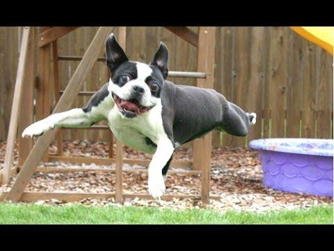 動画で面白画像!「絶対笑う」最高におもしろ犬,猫,動物のハプニング, 失敗画像集 2017 #30の面白画像
