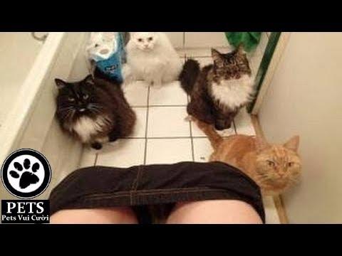 動画で面白画像!「絶対笑う」最高におもしろ犬,猫,動物のハプニング, 失敗画像集 2017 #32の面白画像