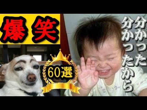 動画で面白画像!【閲覧注意】6秒で笑える爆笑おもしろ画像まとめ一気に60連発の面白画像